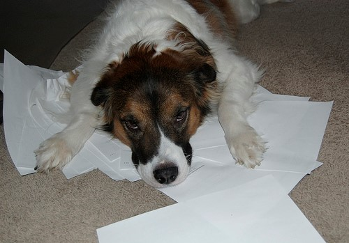 Exhausted Dog